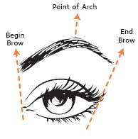 eyebrows-right-shape